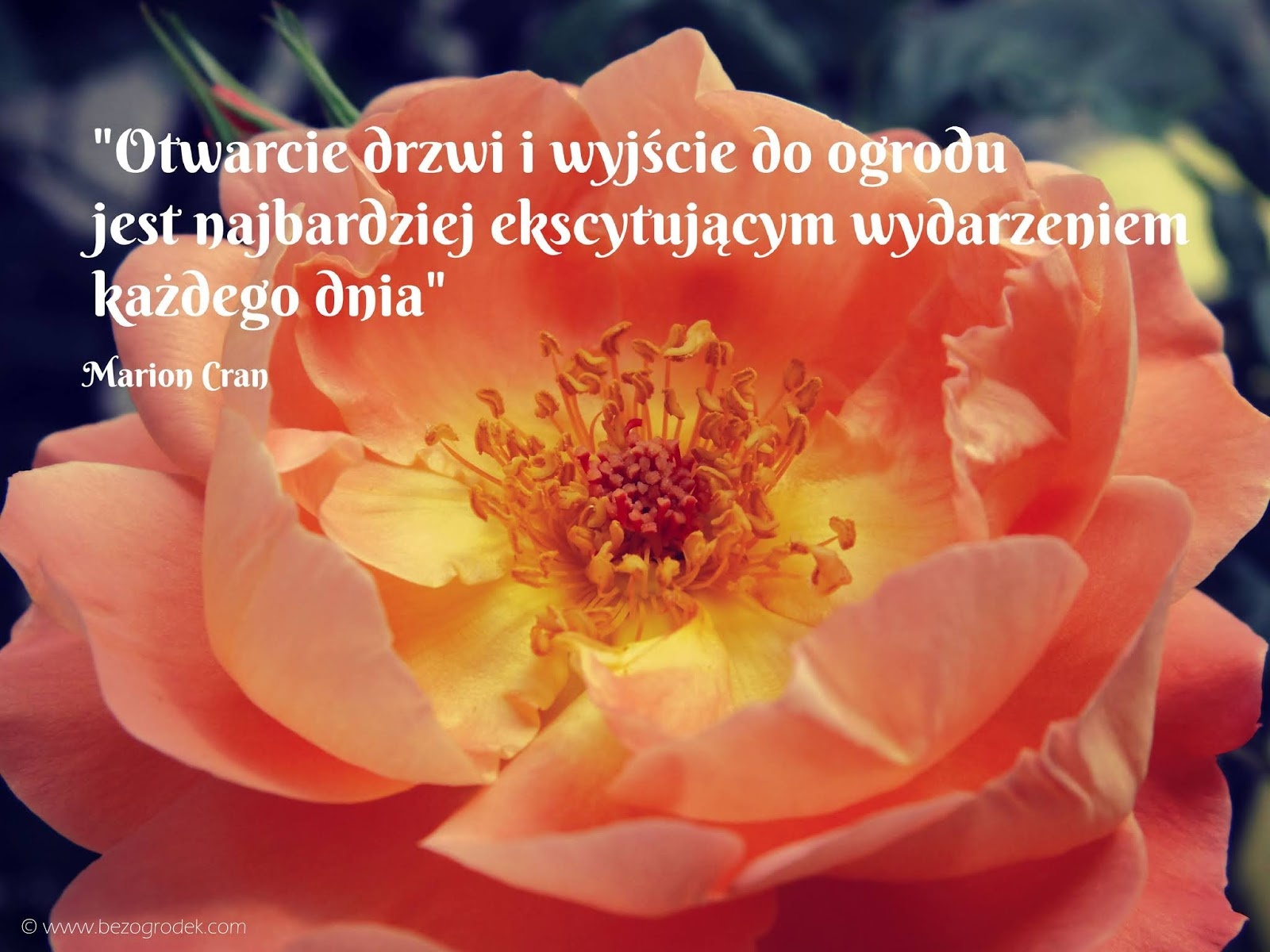 Aforyzmy I Złote Myśli O Kwiatach I Ogrodach Bez Ogródek