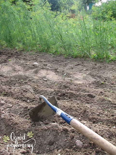 planowanie warzywnika, warzywnik przemyślany, ogród przydomowy