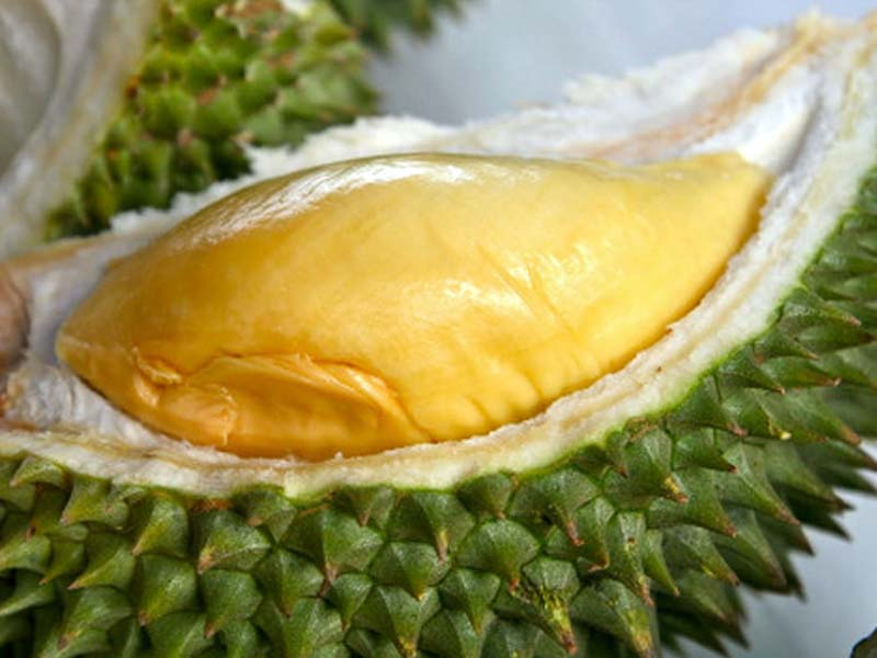 In general, durian is a large fruit which can reach to 30 cm long and 15 cm diameter with thorny green to brown skin.