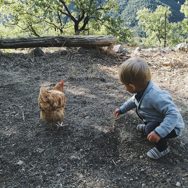 Cute toddler feeding a little chicken