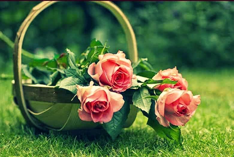 بستان ورد المصــــــــراوية - صفحة 2 Cesto-rosas-ROSA