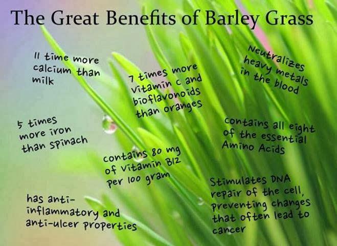 Barley Grass Health Benefits ~ Nutritionist Clinic