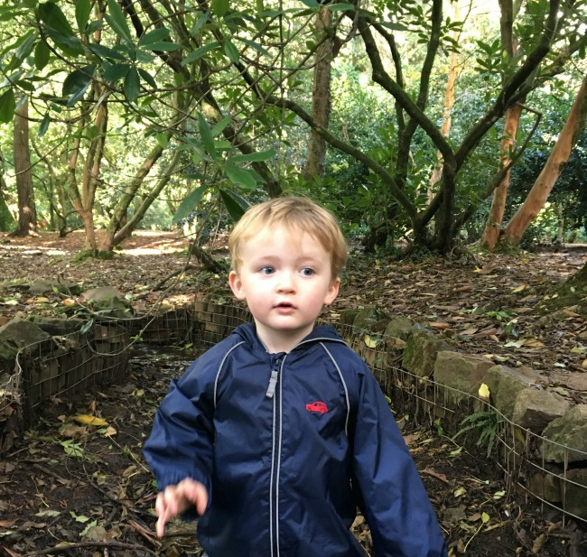 #MySundayPhoto-number-43-toddler-in-wood
