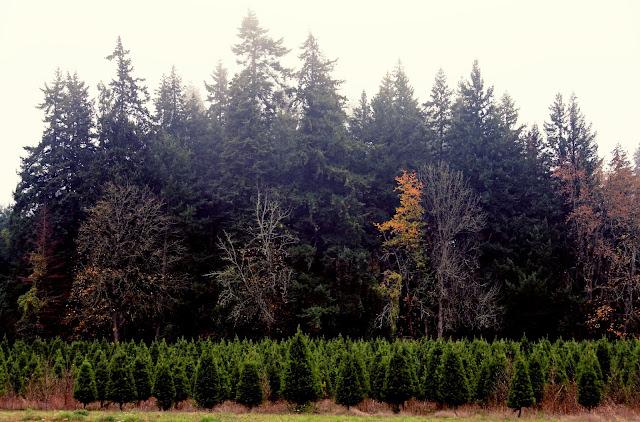 Christmas Tree Farm Oregon