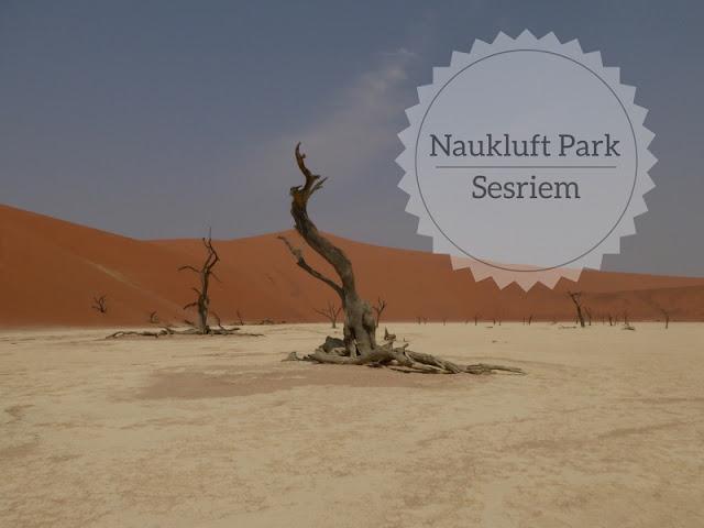Cosa vedere nel Parco Nazionale Namib-Naukluft. dead Vlei
