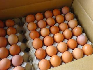 ciri-ciri-telur-palsu.jpg