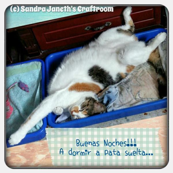 Menchis, Gatos, Dormir