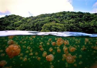 http://www.wisatakalimantan.com/2016/08/pesona-pulau-dan-danau-kakaban.html