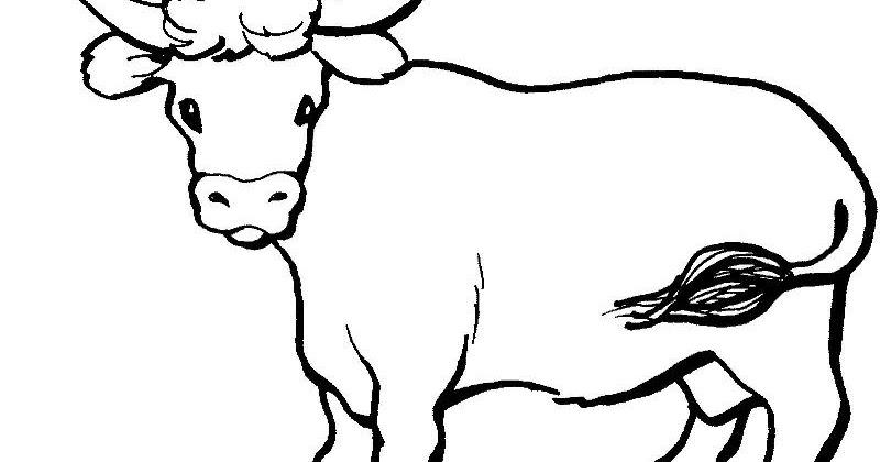 23 gambar sketsa hewan sapi paling dicari