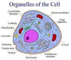 BIOLOGY IS FUN: Biology Notes