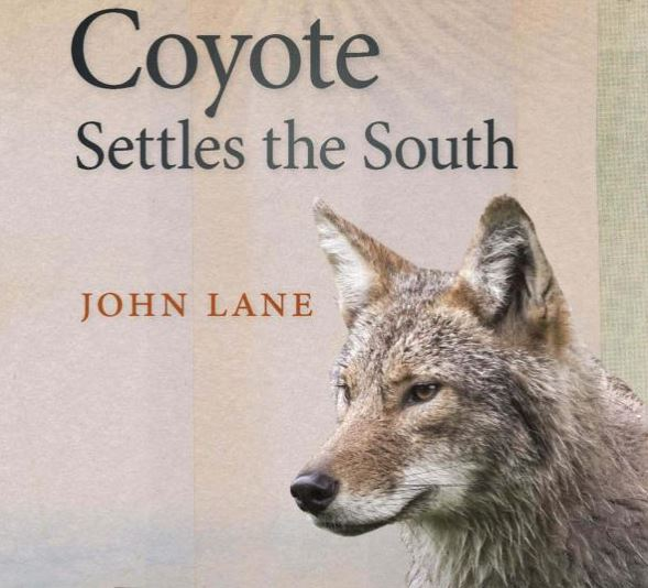 coyote mature personals Events, coupons, classifieds these people have a great sense of humor and they want to make you smile today.