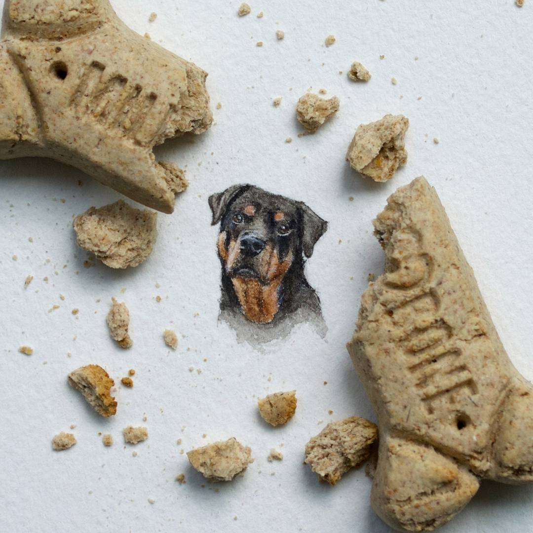 15-Rottweiler-Dog-Rachel-Beltz-Creative-Miniature-Paintings-www-designstack-co