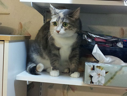 Cat hiding on shelf