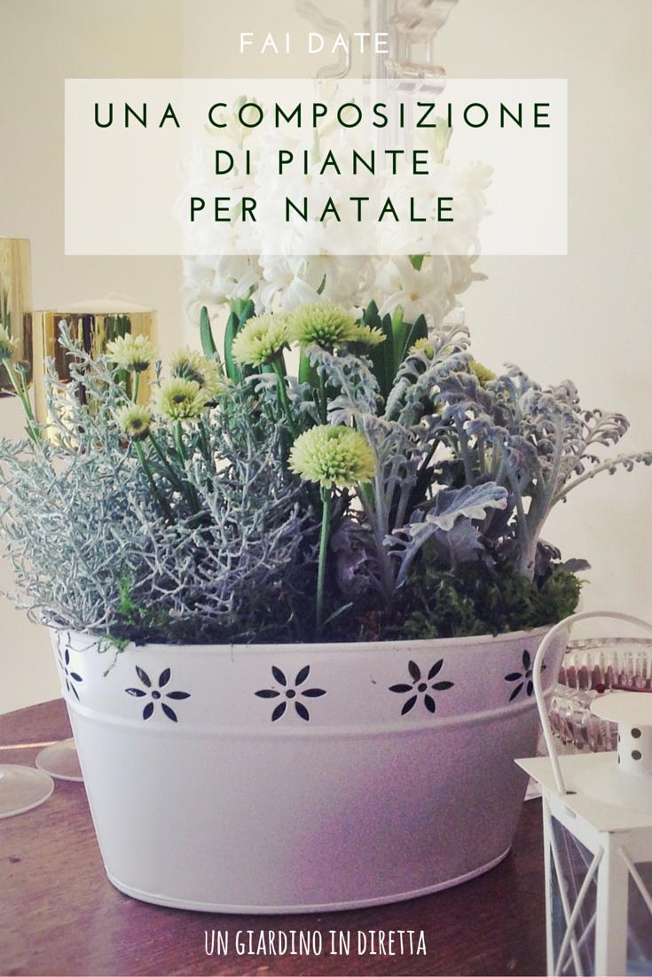 Composizione Vasi Da Balcone fai da te una composizione di piante per natale - un
