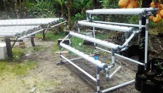 Cara mudah menanam padi hidroponik yang baik