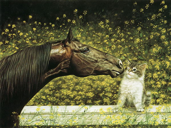 """Lesley Harrison"" An American Animal Painter"