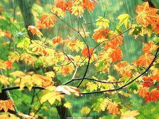 ramas-de-hojas