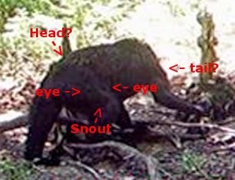 Bigfoot a mystery