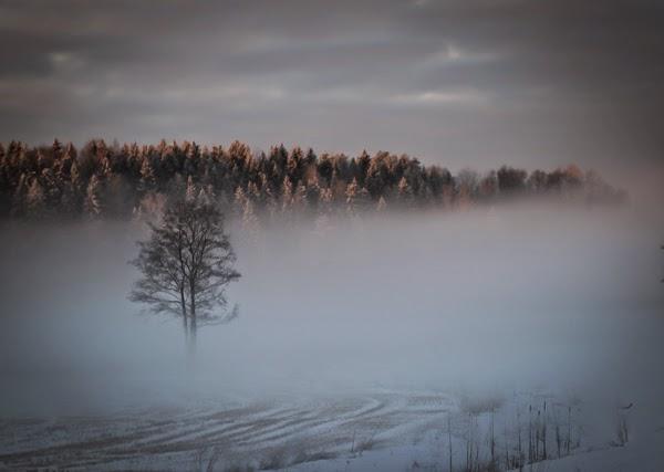 fog photography valokuvaus