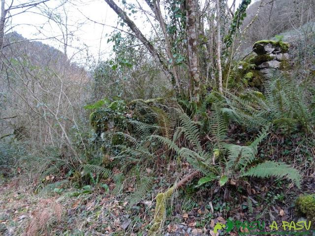 Ruta a la Pica de Peñamellera: Tramo entre bosque