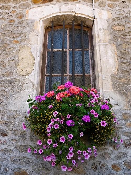Janelas com Floreiras - Windows Boxes Flowers