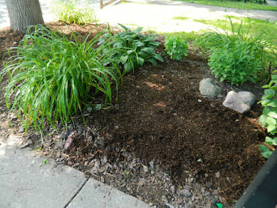 Little Italy Toronto Front Garden Clean up after by Paul Jung Gardening Services