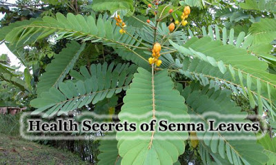 Image result for senna leaves