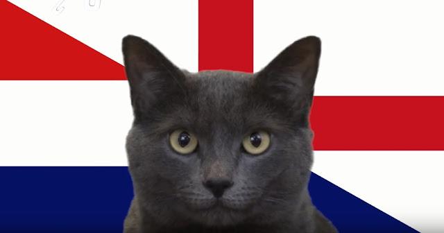 Mèo tiên tri Cass dự đoán Anh sẽ thắng Croatia trận bán kết World cup - Win2888vn