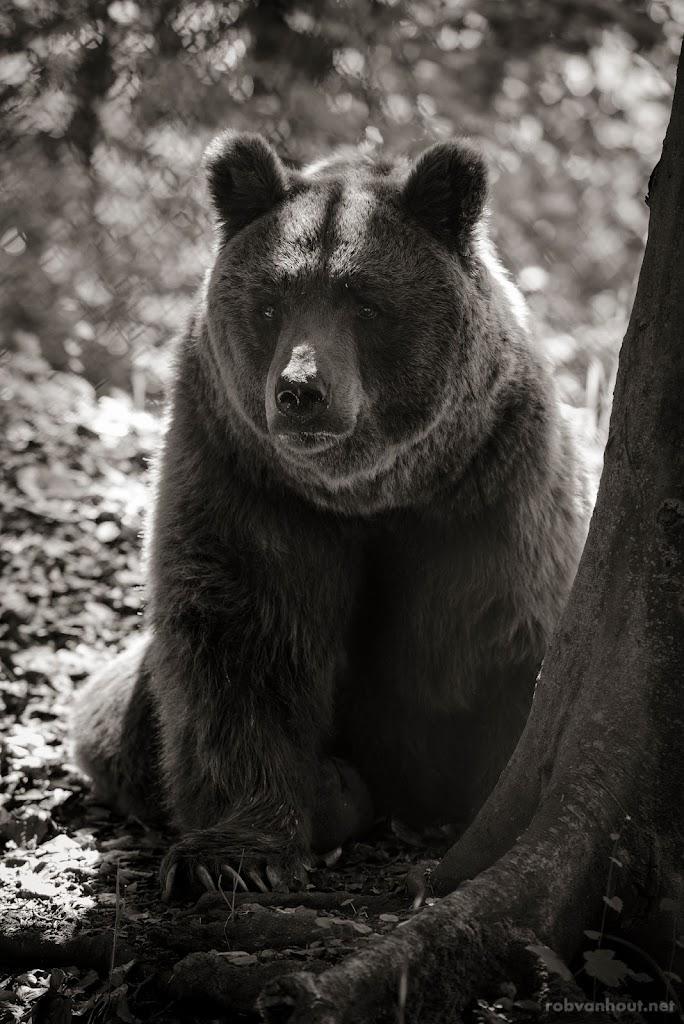 <b>Brown Bear</b> Alternativer Bärenpark Worbis