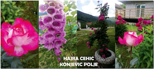 Ruže, Konjević Polje