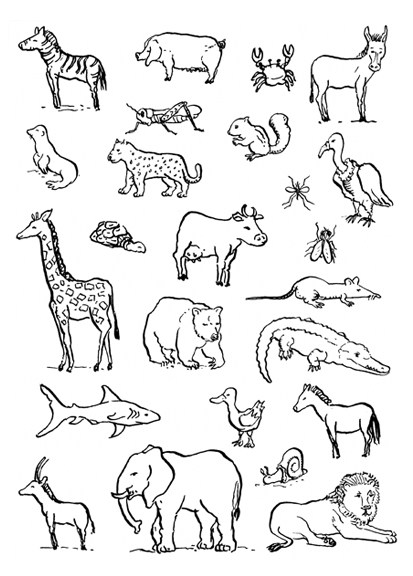 Animais Domesticos E Selvagens Atividades Exercicios Desenhos