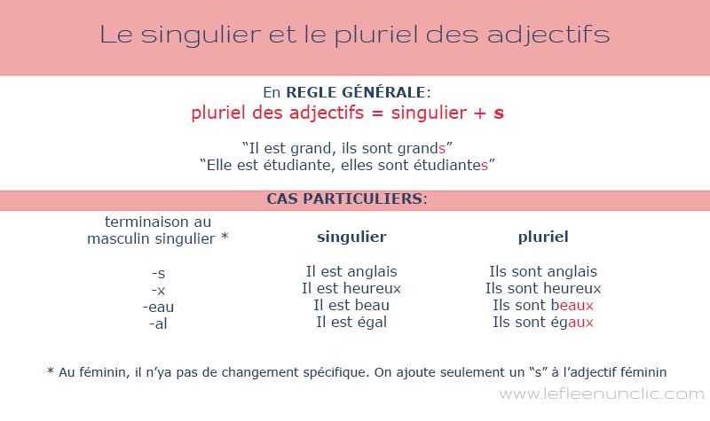 le pluriel des adjectifs en français infographie fle