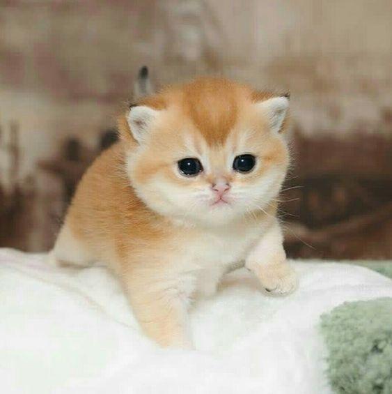 16 Nombres para Gatos muy Originales y Divertidos