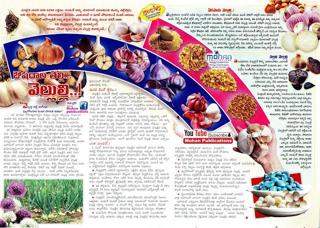 ఔషదాల తల్లి... వెలుల్లి..! Garlic Populadabba Spices Ayurvedam Ayurveda IndianSpices SouthIndianSpices GarlicFamily GarlicGinger GarlicPaste EenaduSundayMagazine EenaduSundayPaper EenaduSundayEpaper BhakthiPustakalu Bhakthi Pustakalu Bhakti Pustakalu BhaktiPustakalu