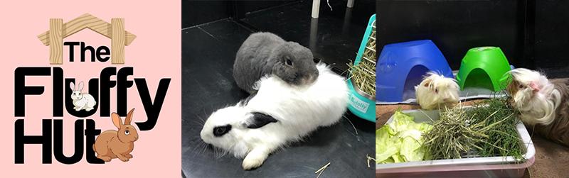Rabbit Hotels in singapore