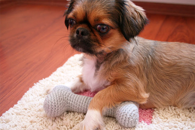 toy for a pekingese