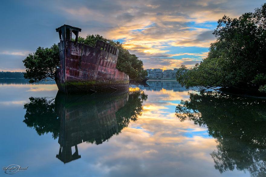 Floating Forrest of Homebush Bay