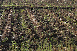 Pencemaran Tanah dan Cara Penanggulangannya