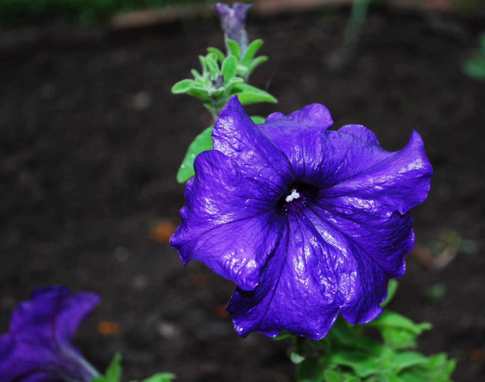 purple flower pictures