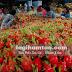 Thanh long Bình Thuận được nhiều nước chấp nhận