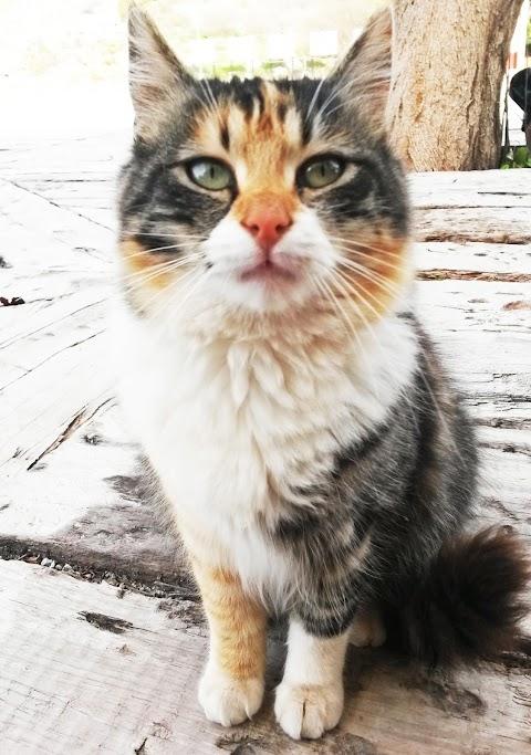 Kucing Jalanan di Turki