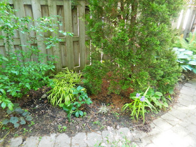 Cabbagetown Toronto shade garden makeover before Paul Jung Gardening Services