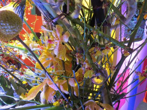 Philadelphia Flower Show 2020- Le Strade delle Cinque Terre