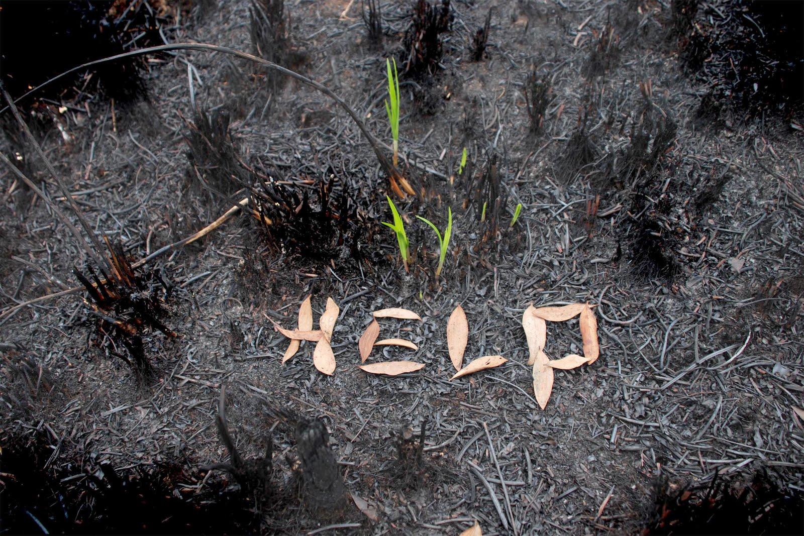 pencinta alam akibat kerusakan alam