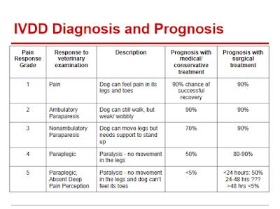 doenças de coluna em cães