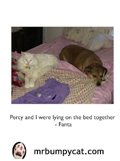 Image: Percy and Fanta lying on the bed. Text: Percy and I were lying on the bed together - Fanta