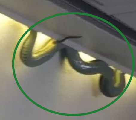 snake spotted emirates flight