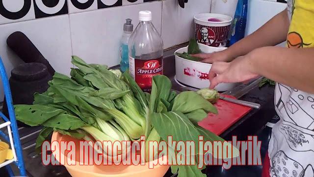 Mencuci sayuran pakan jangkrik