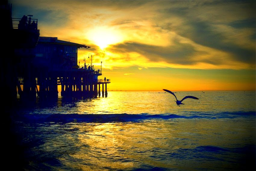 Morgan's Milieu | Positive Thinking: Pier at sunset, with bird