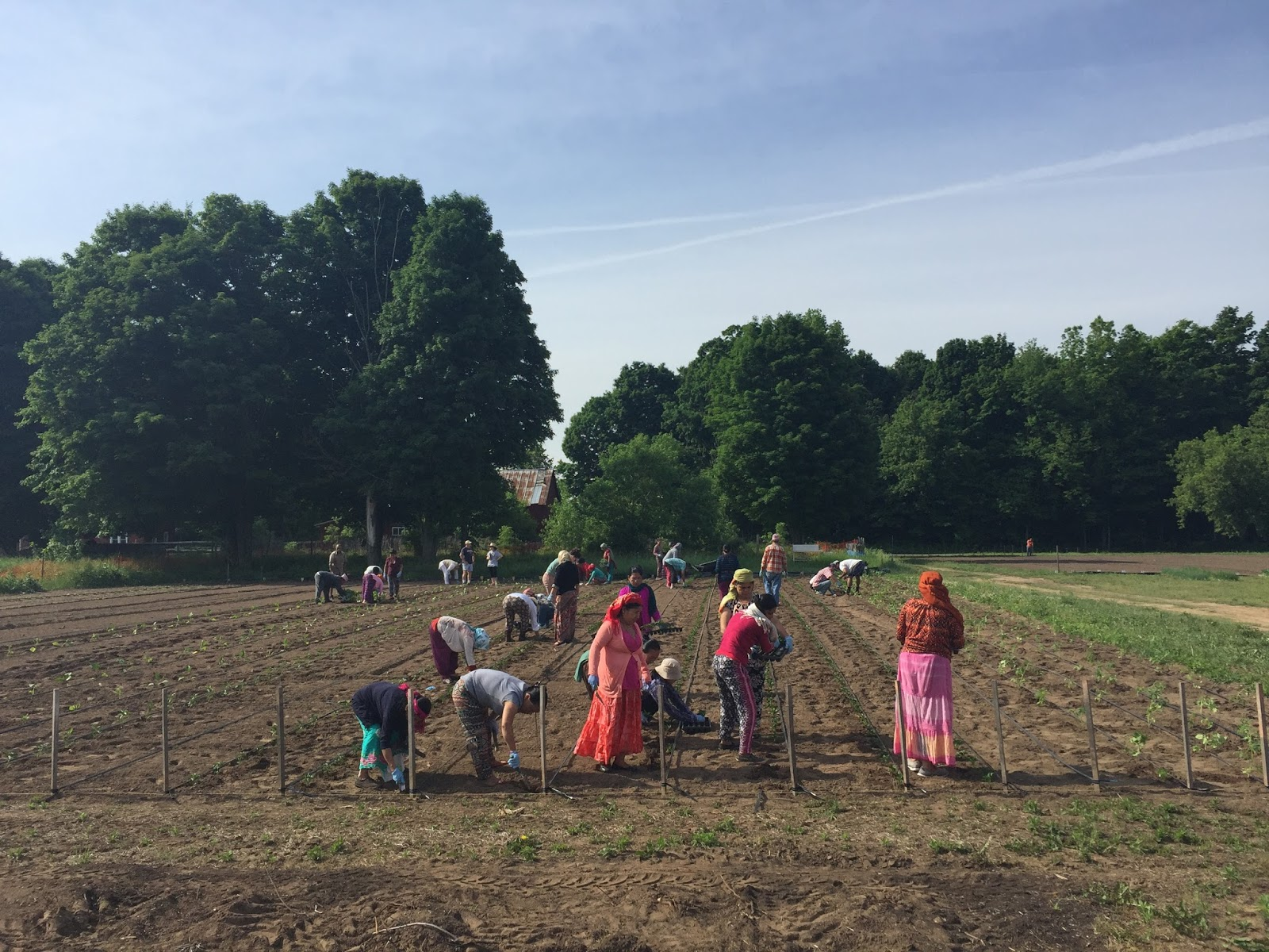 update from the field june 24